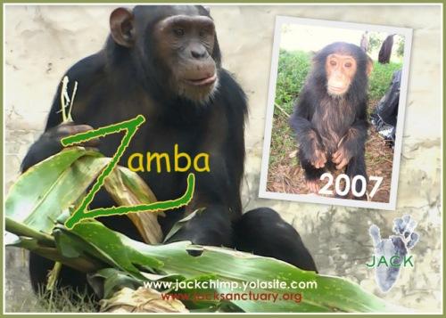 zamba 8 ans-002