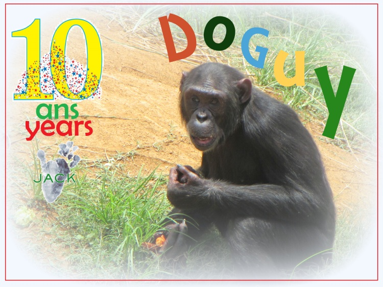 doguy 10