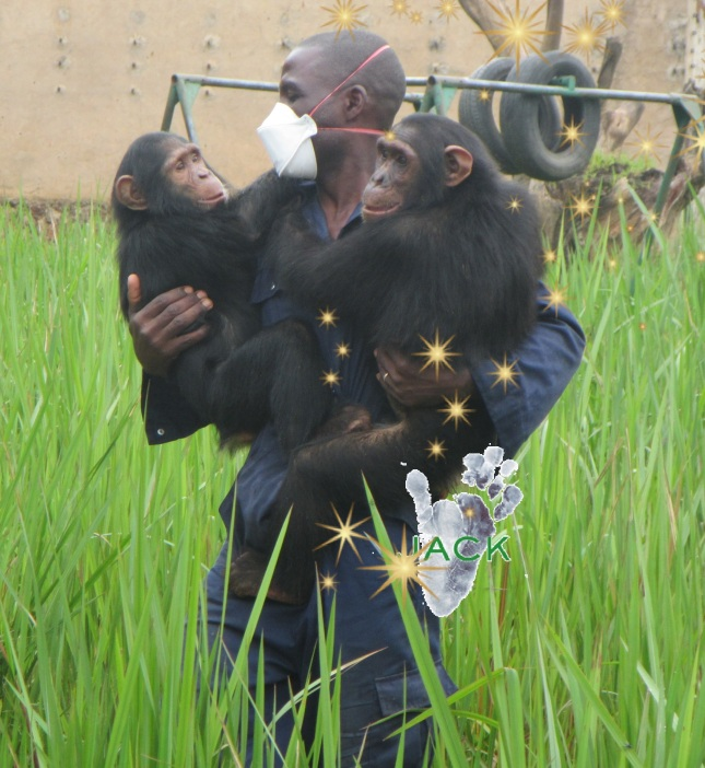 soigneur & chimp (4)