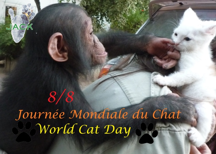 journée mondiale du chat