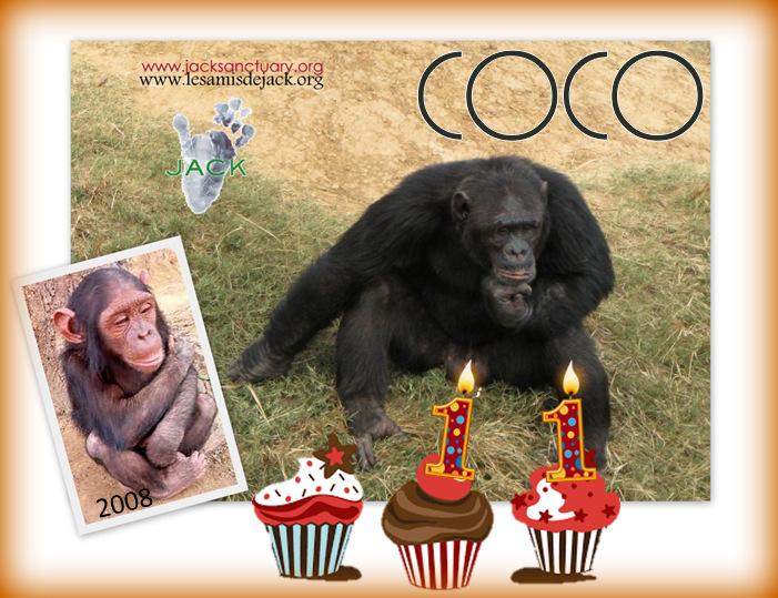 coco 11